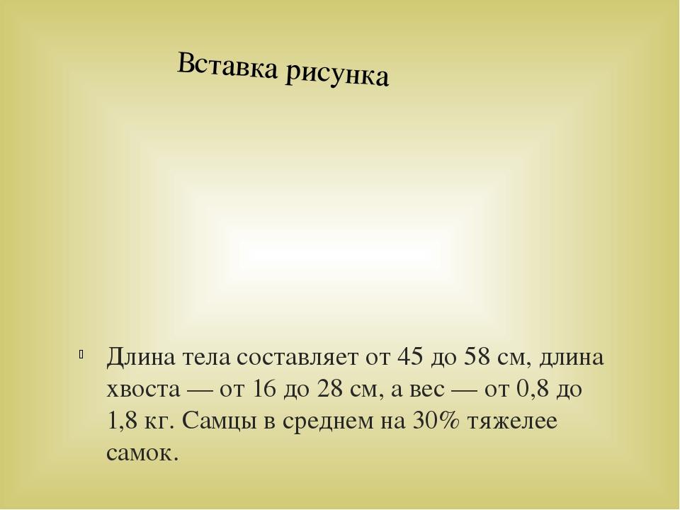 Длина тела составляет от 45 до 58 см, длина хвоста — от 16 до 28 см, а вес —...