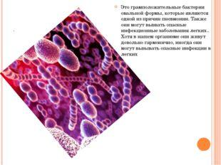 . Это грамположительные бактерии овальной формы, которые являются одной из пр