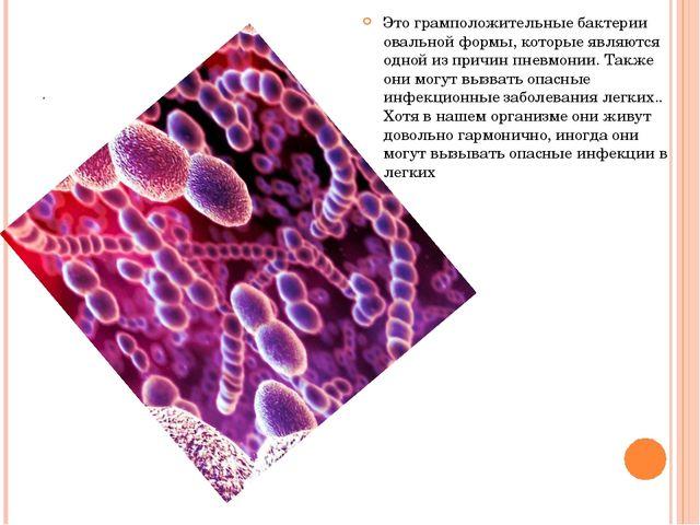 . Это грамположительные бактерии овальной формы, которые являются одной из пр...