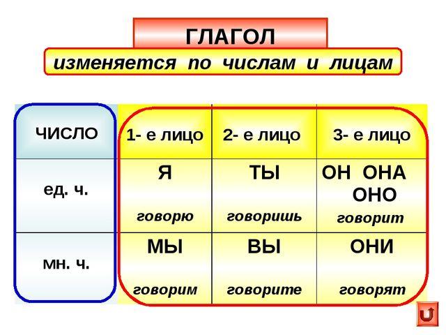 ГЛАГОЛ изменяется по числам и лицам ЧИСЛО 1- е лицо 2- е лицо  3- е лицо е...