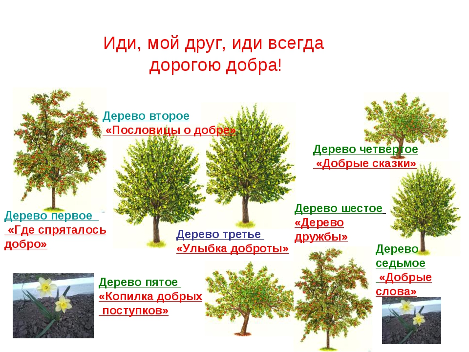 Дерево первое «Где спряталось добро» Дерево второе «Пословицы о добре» Дерево...