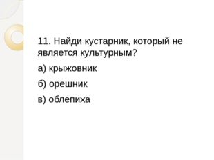 11. Найди кустарник, который не является культурным? а) крыжовник б) орешник
