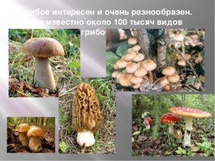 Мир грибов интересен и очень разнообразен. Учёным известно около 100 тысяч ви
