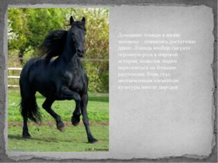 Домашние лошади в жизни человека появились достаточно давно. Лошадь вообще сы
