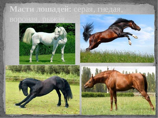 Масти лошадей: серая, гнедая, вороная, рыжая.