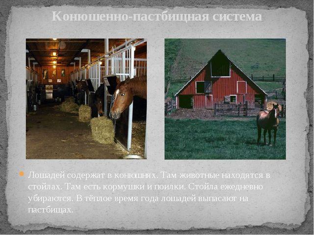 Конюшенно-пастбищная система Лошадей содержат в конюшнях. Там животные находя...