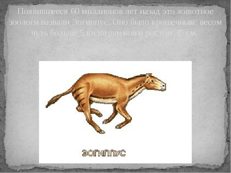 Появившееся 60 миллионов лет назад это животное зоологи назвали Эогиппус. Оно...
