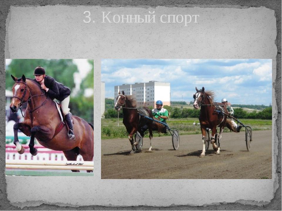3. Конный спорт