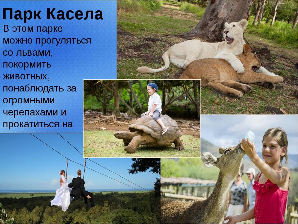 Парк Касела В этом парке можно прогуляться со львами, покормить животных, пон...