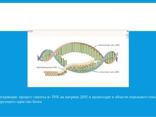 Транскрипция- процесс синтеза м- РНК на матрице ДНК и происходит в области от