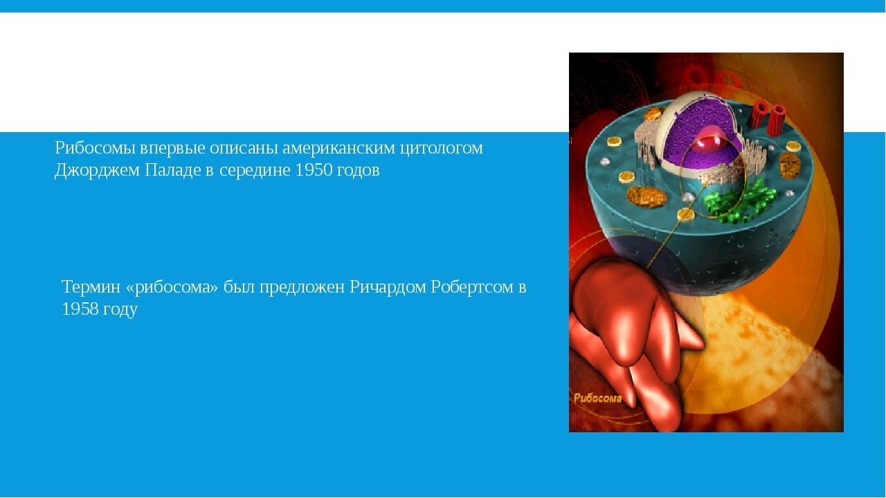 Рибосомы-мельчайшие органоиды сферической или слегка овальной формы, диаметро...