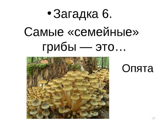 Опята Загадка 6. Самые «семейные» грибы — это… *