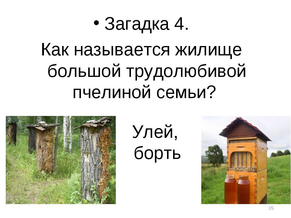 Улей, борть Загадка 4. Как называется жилище большой трудолюбивой пчелиной се...