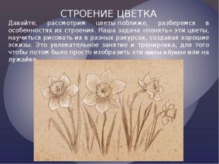 СТРОЕНИЕ ЦВЕТКА Давайте, рассмотрим цветыпоближе, разберемся в особенностях