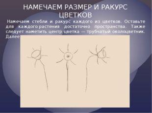 НАМЕЧАЕМ РАЗМЕР И РАКУРС ЦВЕТКОВ Намечаем стебли и ракурс каждого из цветков