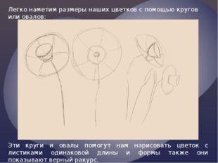Легко наметим размеры наших цветков с помощью кругов или овалов: Эти круги и