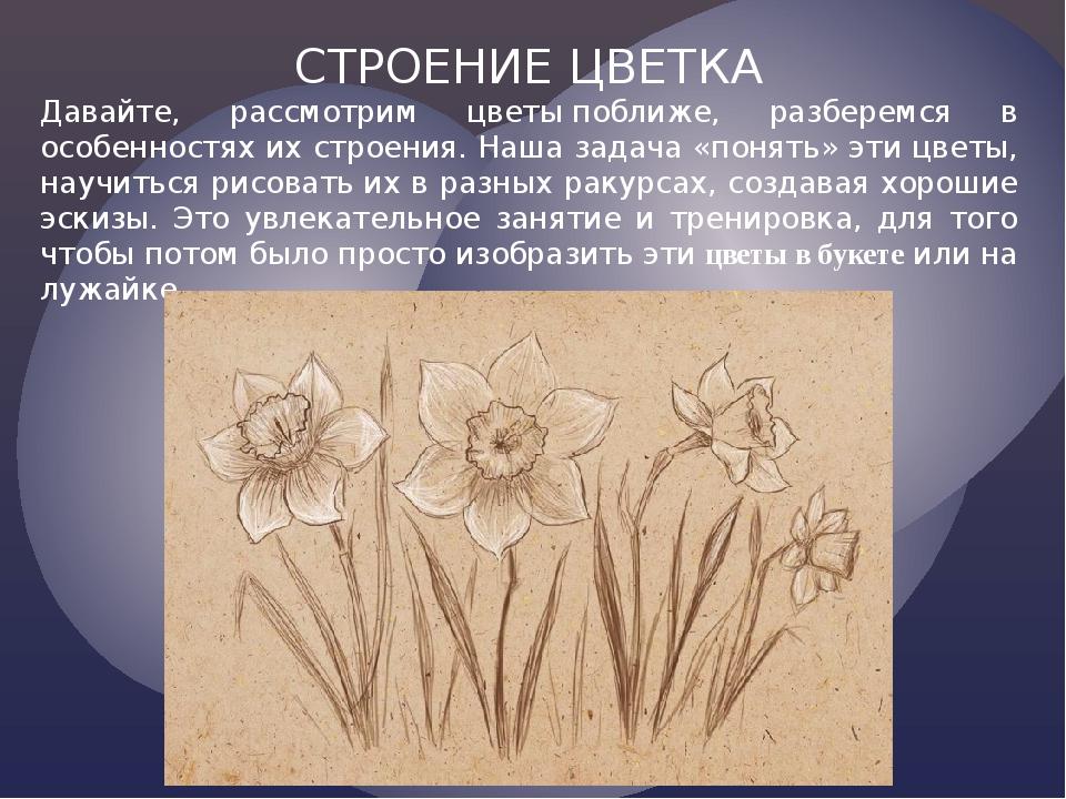 СТРОЕНИЕ ЦВЕТКА Давайте, рассмотрим цветыпоближе, разберемся в особенностях...