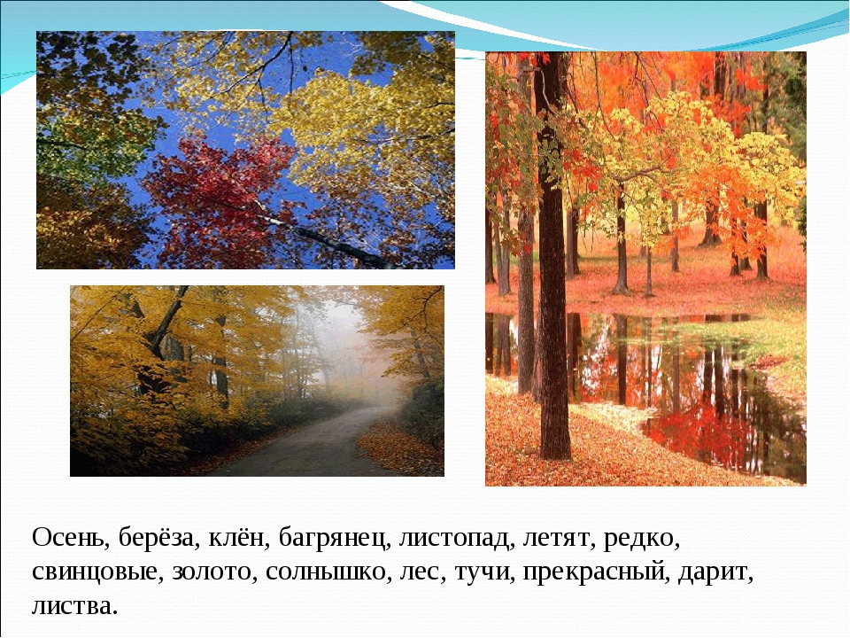 Осень, берёза, клён, багрянец, листопад, летят, редко, свинцовые, золото, сол...