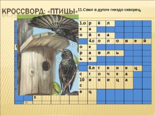 11.Свил в дупле гнездо скворец, 1.орёл 2.сорока