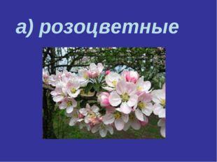а) розоцветные
