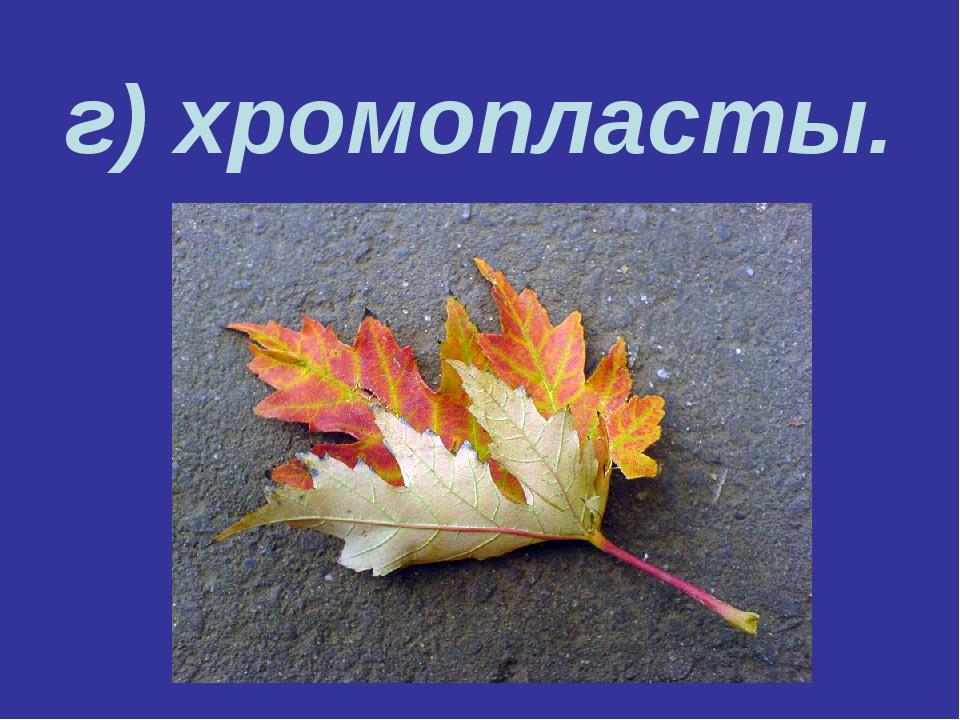 г) хромопласты.