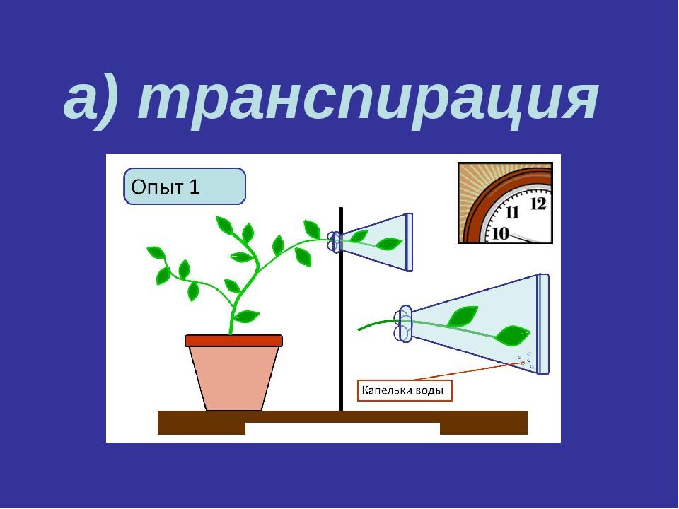 а) транспирация