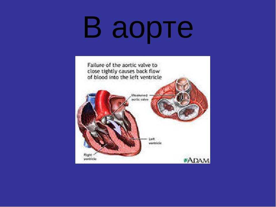В аорте