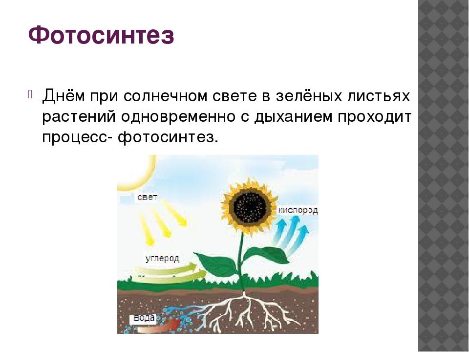 Фотосинтез Днём при солнечном свете в зелёных листьях растений одновременно с...