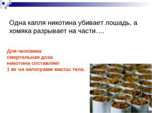 Одна капля никотина убивает лошадь, а хомяка разрывает на части…. Для челове