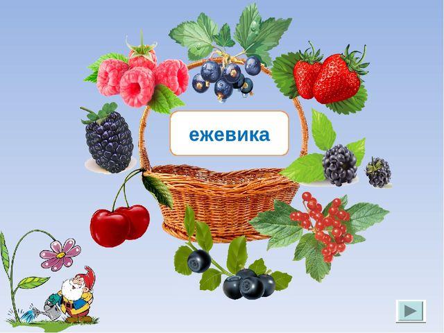 ежевика Лукяненко Э.А. МКОУ СОШ №256 г.Фокино