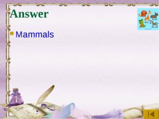 Answer Mammals
