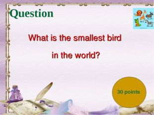Question What is the smallest bird in the world? 30 points
