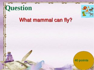 Question What mammal can fly? 40 points