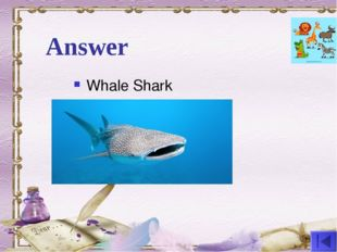 Answer Whale Shark