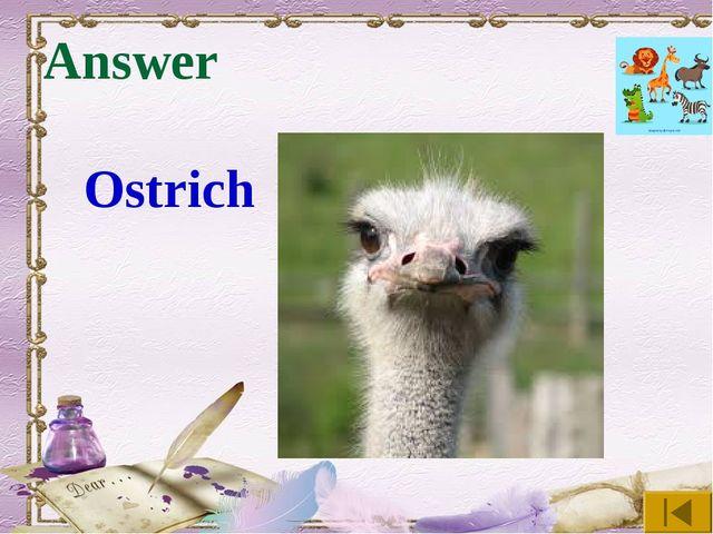 Answer Ostrich