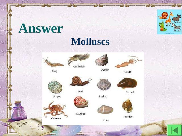 Answer Molluscs