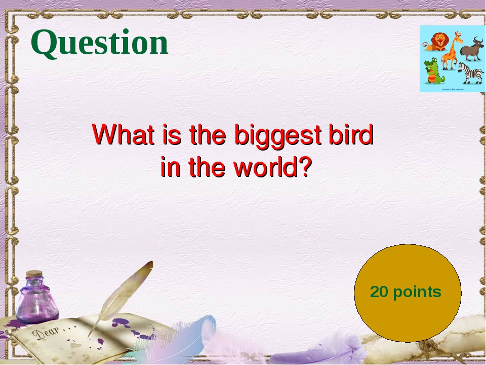 Question 20 points What is the biggest bird in the world?