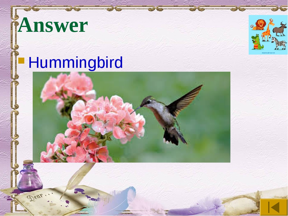 Answer Hummingbird