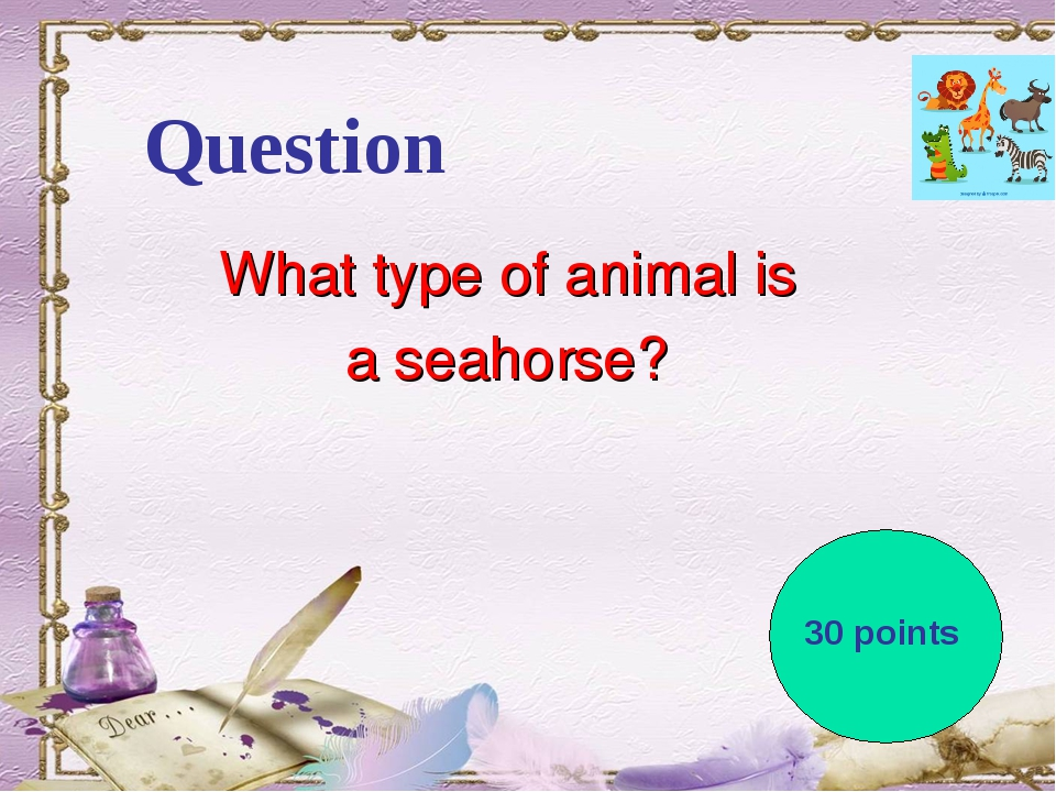 Question What type of animal is a seahorse? 30 points