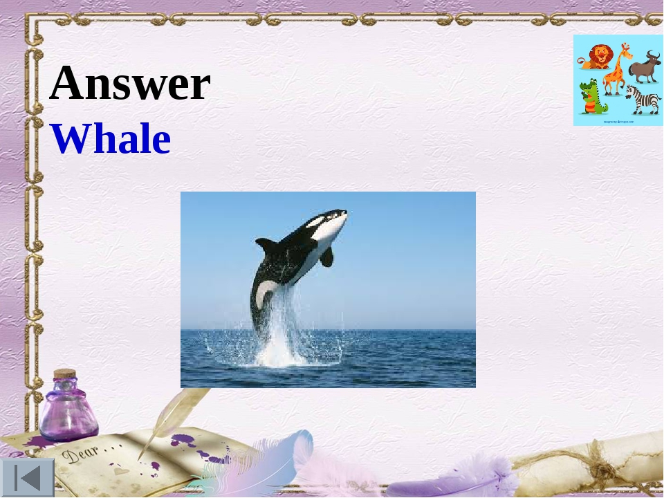 Answer Whale