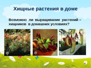 Хищные растения в доме * Возможно ли выращивание растений – хищников в домашн