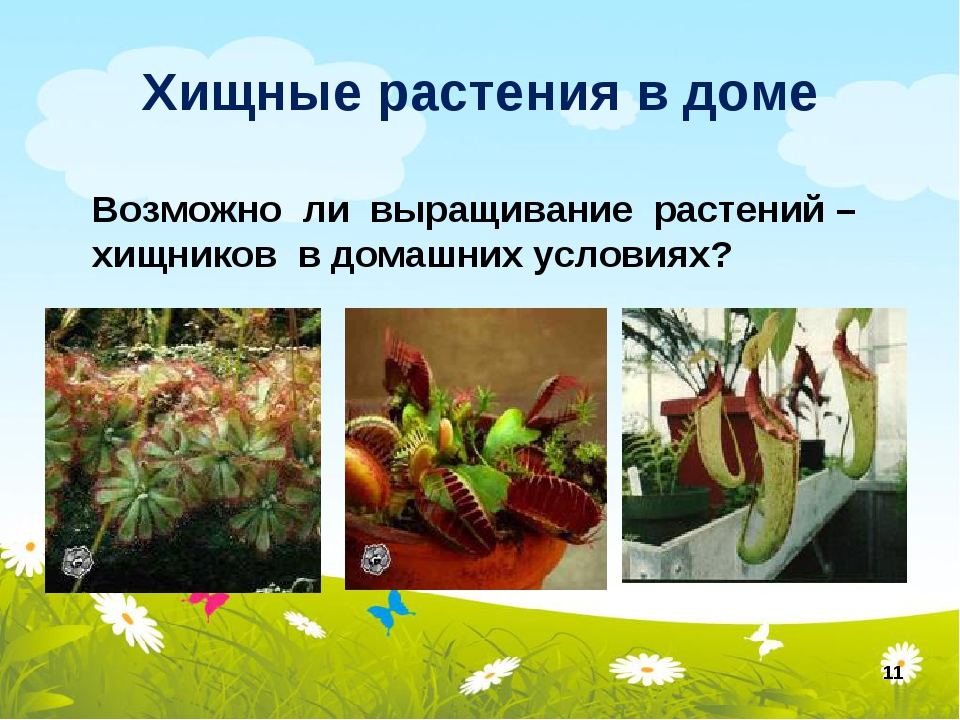 Выращивание хищных растений 62