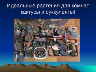 Идеальные растения для комнат кактусы и суккуленты!