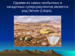 Одними из самых необычных и загадочных суперсуккулентов является род Литопс (
