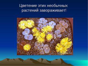 Цветение этих необычных растений завораживает!