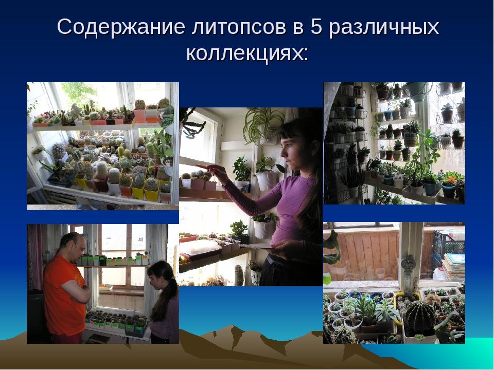 Содержание литопсов в 5 различных коллекциях: