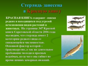 Стерлядь занесена в Красную книгу КРАСНАЯ КНИГА содержит списки редких и нахо