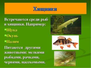 Хищники Встречаются среди рыб и хищники. Например: Щука Окунь Налим Питаются