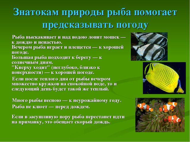 Знатокам природы рыба помогает предсказывать погоду Рыба выскакивает и над во...
