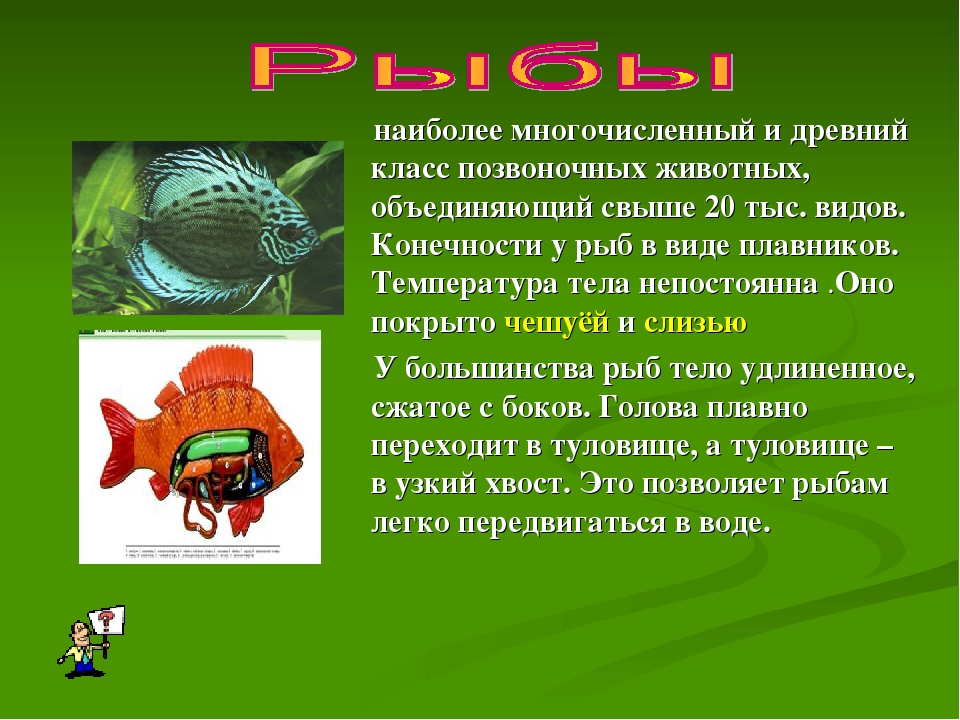 наиболее многочисленный и древний класс позвоночных животных, объединяющий св...